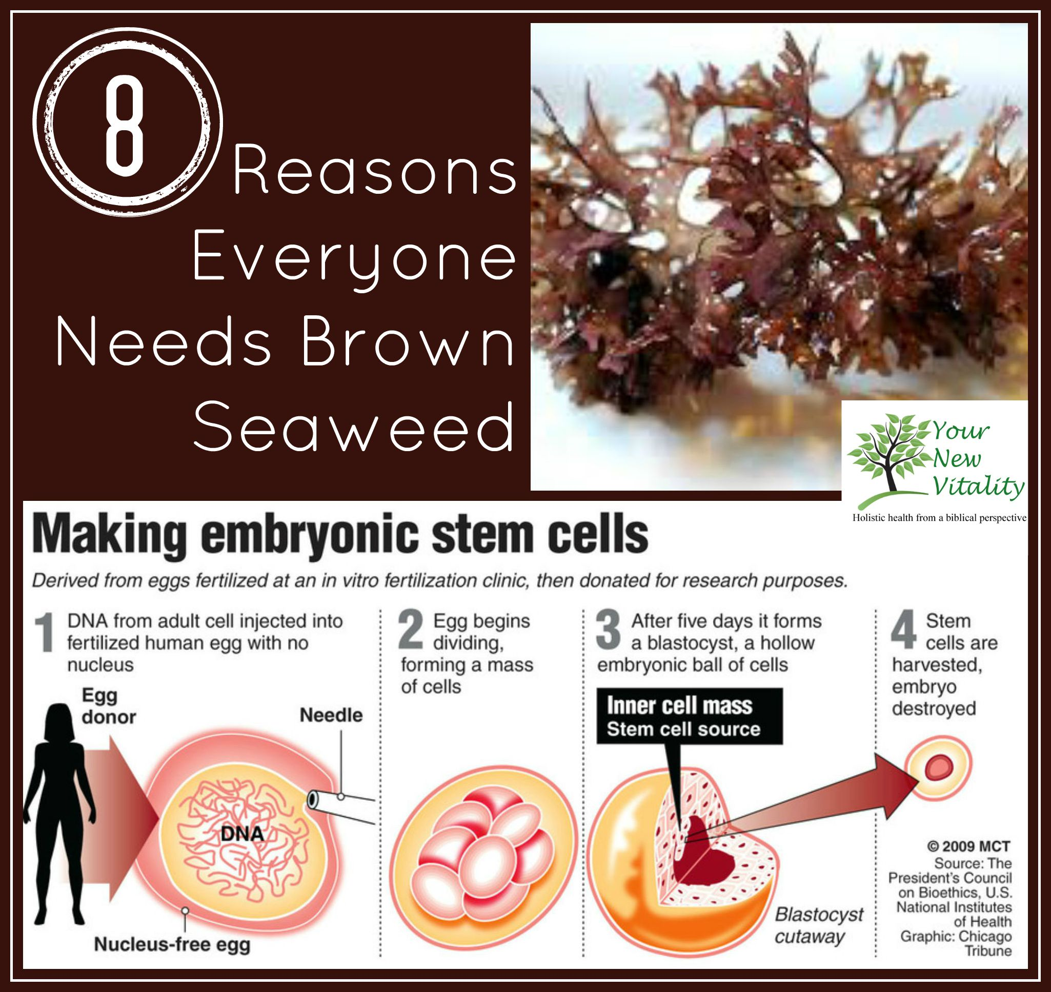 8 Reaons Everyone Needs Brown Seaweed