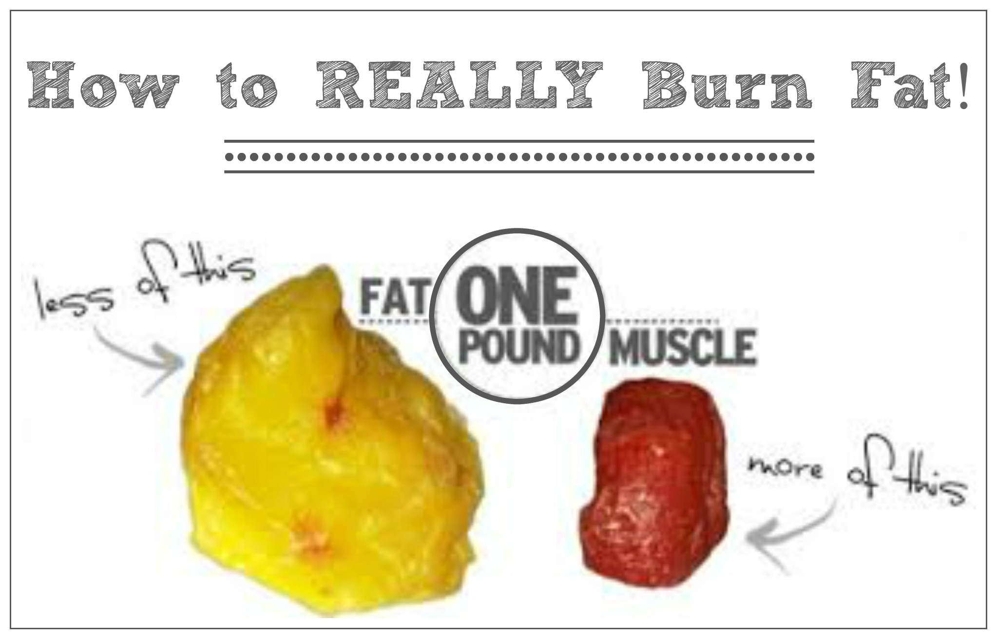 fat v muscle2
